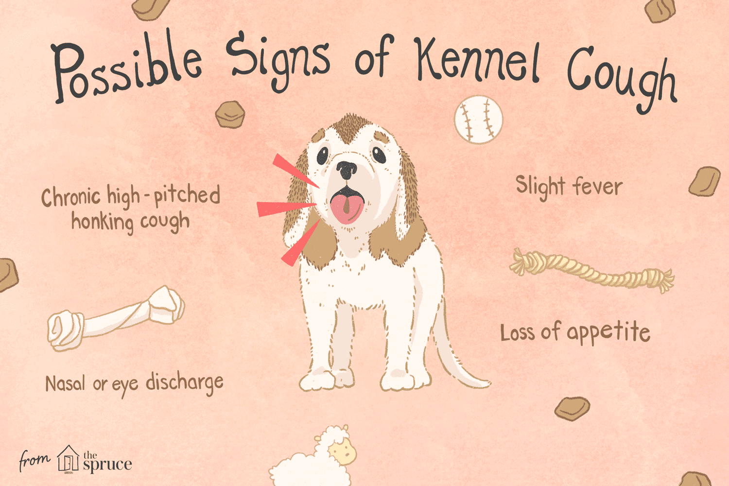 What Is Kennel Cough in Dogs and How Do Dogs Get Kennel Cough?